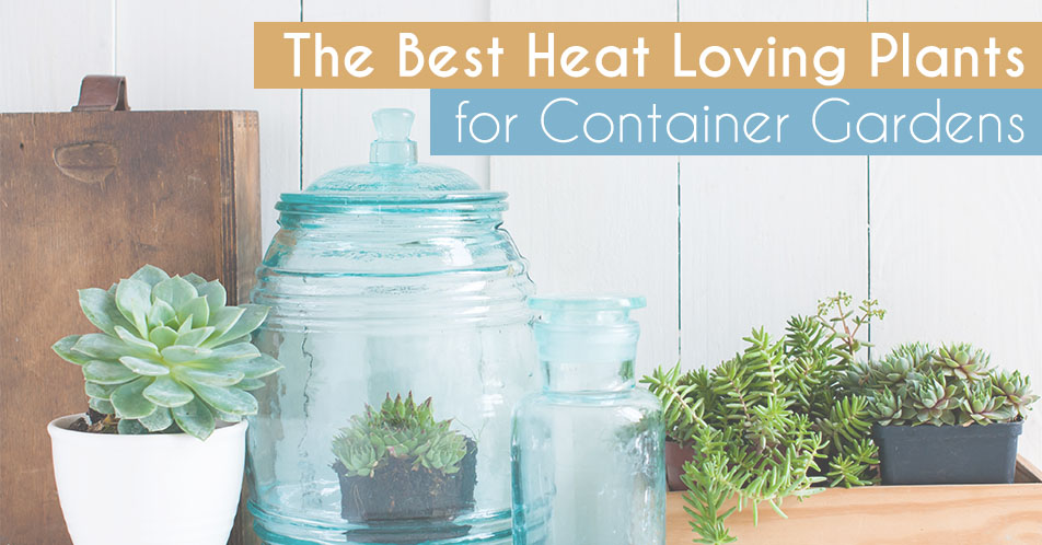 The Best Heat Loving Plants for Container Gardens